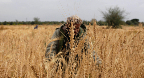Gaza farmers dodge bullets to harvest crops - Al-Monitor: the Pulse of the Middle East | Upsetment | Scoop.it