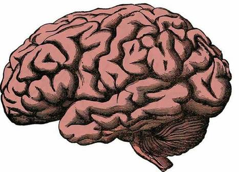 A Critical Mechanism for Memory Formation | Social Neuroscience Advances | Scoop.it