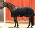Horse Magnetic Massage Therapy UK: Equine Massage Therapy: Magnetic Rugs, Magnetic Pads, Magnetic Boots | Equestrian Shop in UK | Scoop.it
