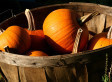 1,872-Pound Zombie Pumpkin Carving | Strange days indeed... | Scoop.it
