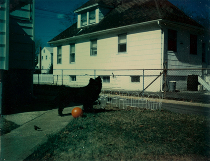 The Great Mystery of Photography: How to Photograph a Black Dog | arts visuels | Scoop.it