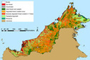 80% of rainforests in Malaysian Borneo logged | Say No To Palm Oil | Scoop.it
