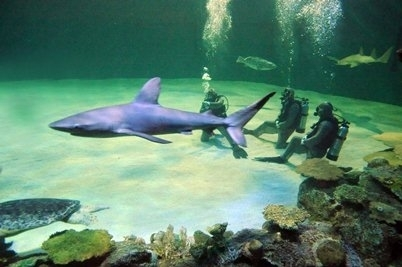 Diving With Sharks in Las Vegas - Forbes | Xposed | Scoop.it