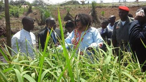 Préserver l'écosystème marin avec le riz de mangrove   Eco Innovation   Scoop.it