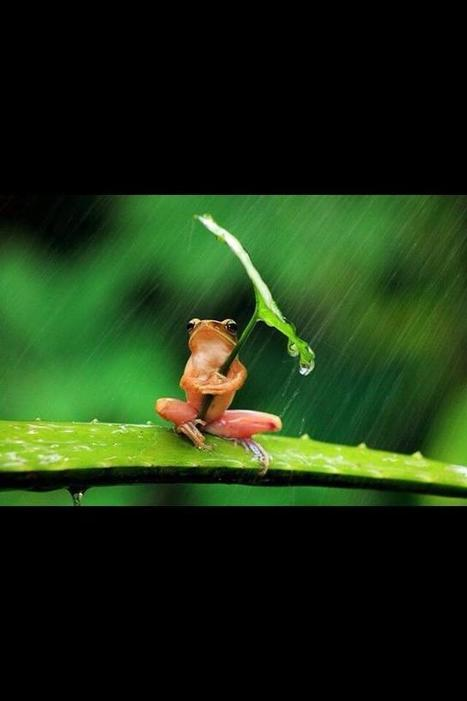 Twitter / IanConningham: What's that you say? A tiny ... | Lemur Leaf Frogs | Scoop.it