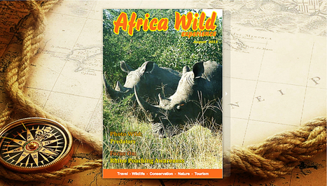 Africa Wild Experience - FREE Online Magazine | What's Happening to Africa's Rhino? | Scoop.it
