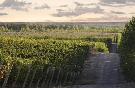 Seven steps to understanding Argentina and its wines | Cavissima - Actualité vin | Scoop.it