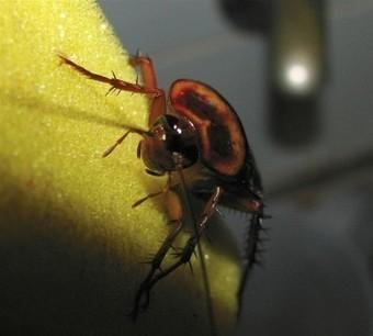 Consecuencias de las plagas de cucarachas en casa   Pest Control Madrid   Negocios y Comercios   Scoop.it