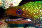 In Photos: Spooky Deep-Sea Creatures | Science, Technology | Scoop.it