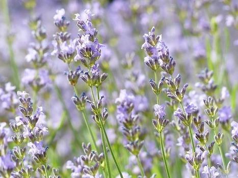 Les huiles essentielles - Aromathérapie -Interview d'une aromathérapeute- Made by Emy | Maternité | Scoop.it