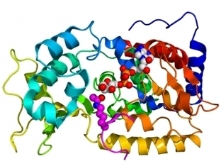 Protein that boosts longevity may protect against diabetes | Longevity science | Scoop.it