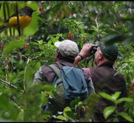 Diez millones de turistas viajan al año para ver aves | Turismo | Scoop.it