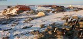 TerreAdelie2014 :: #Vagabond #antarctique #phoque #manchot #banquise | Arctique et Antarctique | Scoop.it