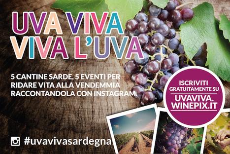 Le cantine raccontano la vendemmia attraverso i social media - Sardegna Live   SOCIAL MEDIA ADDICTION   Scoop.it