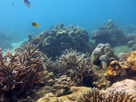 Obituaries for coral reefs may be premature, study finds | Geography in the classroom | Scoop.it