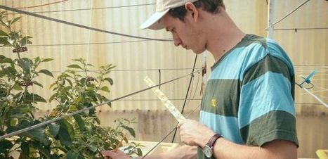 Undergrad's Research Involves Plant With Anti-Tumor Potential | UANews | CALS in the News | Scoop.it