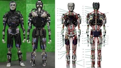 Kengoro, le robot humanoïde qui fait des pompes... et qui sue | Une nouvelle civilisation de Robots | Scoop.it