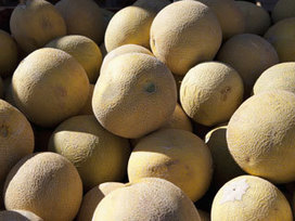 Lessons learned from cantaloupe-listeria outbreak - KFDA | Food Storage | Scoop.it