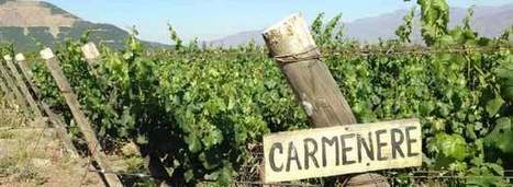 The Best Value Wines of Chile   Vitabella Wine Daily Gossip   Scoop.it