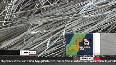 [Eng] Les livraisons de bovins interdites à Miyagi et Iwate | NHK WORLD English (+vidéo) | Japon : séisme, tsunami & conséquences | Scoop.it
