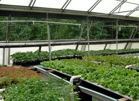 New Orleans' New Urban Farming and Food Center | This Gives Me Hope | Scoop.it