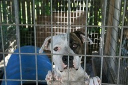 Shut Down the Adoption and Sale of Pets on Craigslist   animals   Scoop.it
