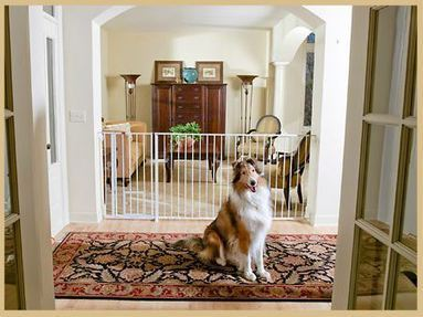 """Extra Wide Pet Gate By Carlson, 29-44 """" wide - 