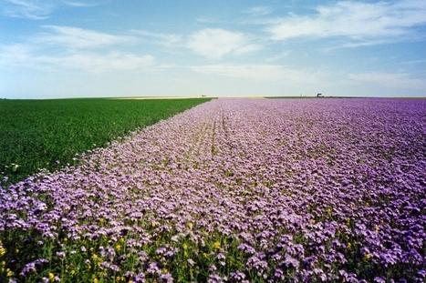 : Préservation des colonies d'abeilles domestiques en Beauce - Campagnesetenvironnement.fr | Abeilles, intoxications et informations | Scoop.it