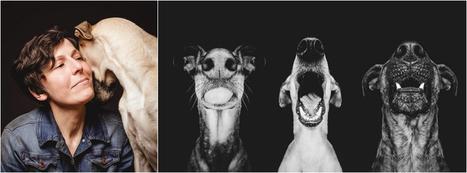 Elke Vogelsang photographie ses chiens | Graine de Photographe The Blog | Photographie | Scoop.it