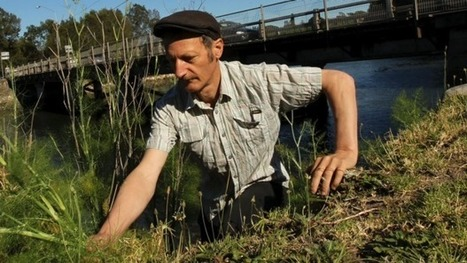 Forager Diego Bonetto reaps the benefits of edible weeds | Erba Volant - Applied Plant Science | Scoop.it
