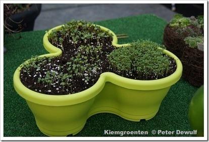 Zaai nu uw eigen kiemgroenten! - GroentenInfo   Planten en eten   Scoop.it