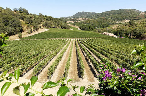 Jefford: Secret wines from Sardinia | Vitabella Wine Daily Gossip | Scoop.it
