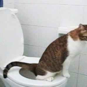 Mon chat n'est pas propre - Z comme Zoo | Animalerie en ligne | Scoop.it