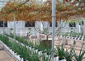 rural hidropónica: Clasificación de los sistemas de cultivo ... | Cultivos Hidropónicos | Scoop.it