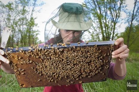 Les abeilles menacées par un pesticide omniprésent | Luttes biologiques | Scoop.it