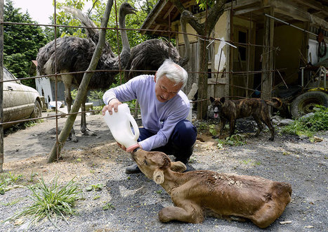 The Radioactive Man Who Returned To Fukushima To Feed The Animals That Everyone Else Left Behind | Coffee Break Ezine | Scoop.it