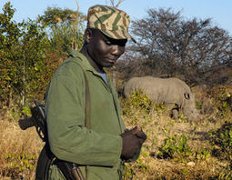 Zambia goes to extremes to protect 'near-threatened' rhinos | Save our Rhino and all animals...this is what it looks like!!!!! | Scoop.it