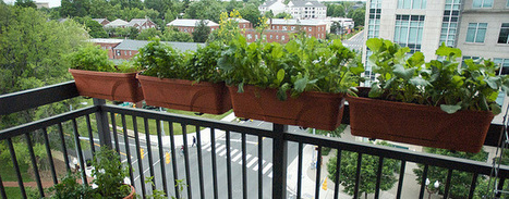 Balcony Gardening | Weather and Climate News | Scoop.it