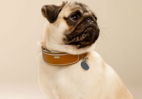 Smart dog collars could be the next big thing in wearables | Learning*Education*Technology | Scoop.it