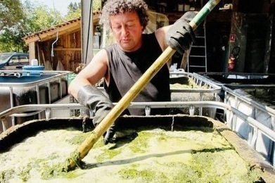 La guerre du purin d'ortie | Comprendre le réel intérêt de produire une agriculture BIO en France plutôt que d'importer des produits présentant un label pas vraiment Certifié. | Scoop.it
