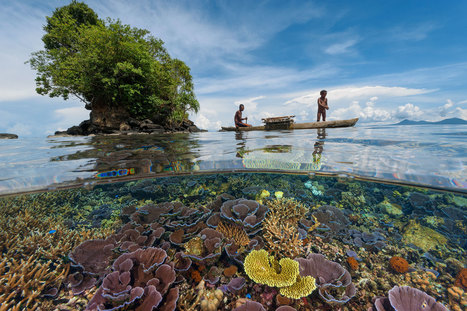 The Oceans Can't Protect Us Anymore—Here's Why | Biodiversity protection | Scoop.it