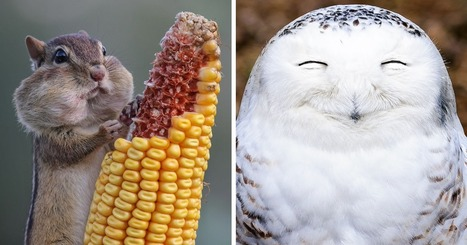 10+ Of The Funniest Entries From The 2016 Comedy Wildlife Photography Awards   Writing mag   Scoop.it