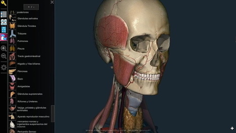 AnatomyLearning, un atlas del cuerpo humano en 3D | EDUCATIC | Scoop.it