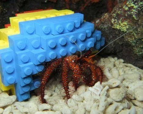 Lego Hermit Crab Shell | Maker Stuff | Scoop.it