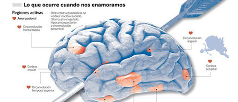 El amor, cuestión de cerebro | neurologia | Scoop.it
