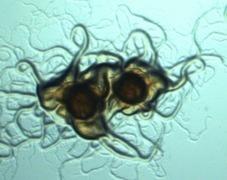 Flavobacterium 2015 October 27-29, 2015 Auburn University Auburn, AL, USA | ASEM Aquaculture Health | Scoop.it