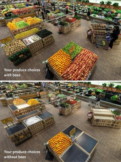 A quoi ressembleraient nos supermarchés sans les abeilles ? | Abeilles, intoxications et informations | Scoop.it