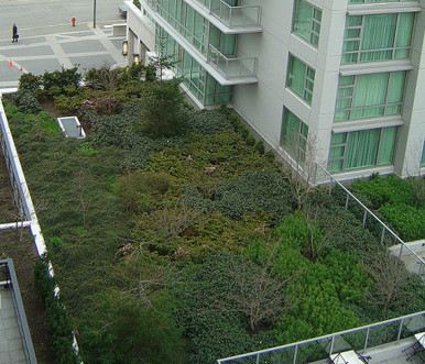 Redefining Urban Gardens: Greening Roofs with Sod | EcoSalon ... | Sustainibility | Scoop.it