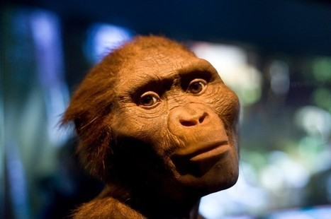 Five Things You May Not Have Known About Lucy The Australopithecus | Aux origines | Scoop.it