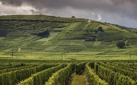 The Alsace A-list | Vitabella Wine Daily Gossip | Scoop.it